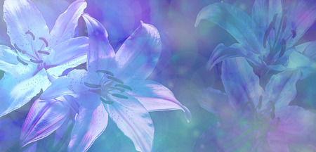 Bokeh Wedding Lillies Banner photo
