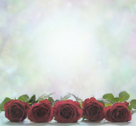 red rose bokeh: Red Roses on muted green background