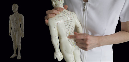 chinese medicine: Acupuncture Model - Traditional Chinese Medicine Training Stock Photo