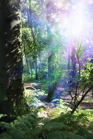 supernatural: Woodland Supernatural Energy