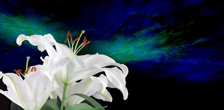 Pure White Lilies Traditioneel voor de vruchtbaarheid