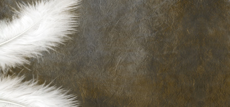 earthly: White Feathers on a grunge dark stone effect background  a white feather in each left hand corner of a wide dark colored stone effect background with plenty of copy space on the right hand side