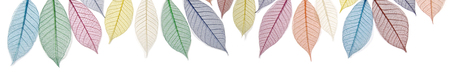 color therapy: Rainbow colored skeleton leaves banner -  wide row of cropped multicolored skeleton leaves on white background