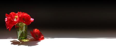 poppy: amapolas rojas bandera - tres amapolas rojas, dos en un vidrio verde transparente con agua sobre un fondo negro oscuro con brillante luz blanca de primer plano y un montón de espacio de la copia Foto de archivo