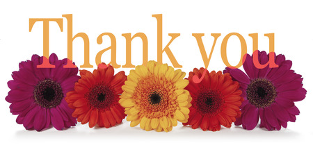 Saying Thank you with Flowers - five dahlia heads laid in a row with the word 'Thank you' emerging from the top in a wide banner on white background