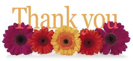 Zegend Bedankt met bloemen - vijf dahlia hoofden in de rij gelegd met het woord 'dankjewel' op de top in een brede banner op witte achtergrond Stockfoto