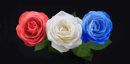 象徴的な赤白と赤、白と黒の背景の多くの国の国旗の色に大幅に青バラ 3頭で青いばら- 写真素材