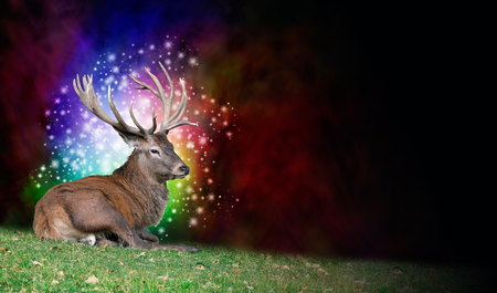 left behind: Stag Party Background - a mature stag seated on grass on left with multicolored sparkling ball of light behind head on a deep red and black background with copy space on right side