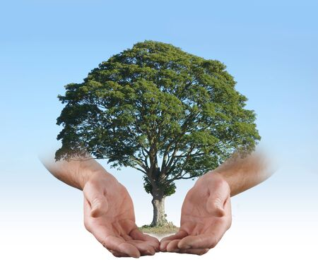 preserve: In the safe hands of a Tree Surgeon -  Mans open palms in offering gesture, with a superimposed tree floating between on a blue sky background fading to white