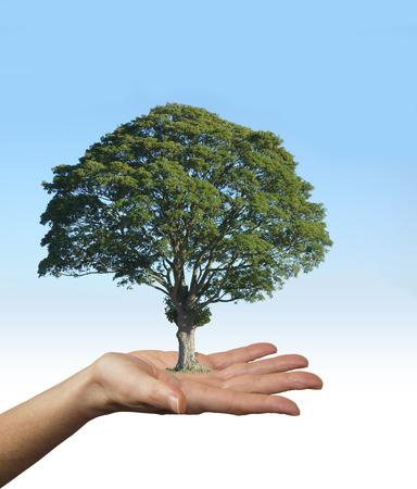 educacion ambiental: Nuestros árboles son los pulmones de nuestra tierra - mujer con palma de la mano en gesto de ofrecimiento con un hermoso árbol en equilibrio sobre su palma, sobre un fondo de cielo azul decoloración a blanco por debajo Foto de archivo