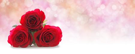 Drie Mooie Rode Rozen Website Kopbal - Drie rode roos hoofden gestapeld aan de linkerkant op een mistige roze perzik gekleurde bokeh achtergrond met veel kopie ruimte aan de rechterzijde Stockfoto