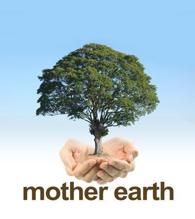 madre tierra: Cuidar la madre tierra - manos ahuecadas de mujeres sobre un fondo claro de cielo azul decoloración de color blanco con un árbol maduro flotando por encima de las manos y las palabras madre tierra debajo