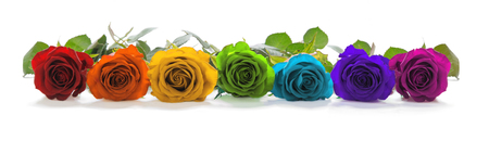 single line: Beautiful Rainbow Colored Row of Roses - a single line of rose heads facing forwards in red, orange, yellow, green, turquoise, indigo and magenta representing the seven chakras