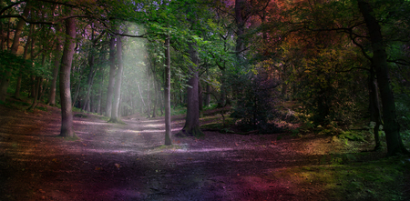 undergrowth: Ethereal Woodland  - Wide woodland scene with a subtle light shaft falling on path and unusual dark rainbow coloring with copy space Stock Photo