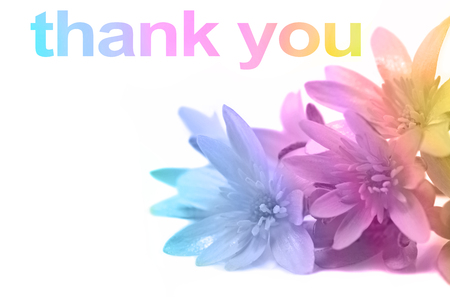 Say thank you with Flowers - soft pastel rainbow colors applied to close up of daisies in right corner and THANK YOU words above with copy space Stock Photo