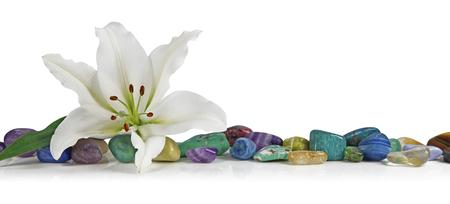 Giglio bianco e guarigione di cristallo - un giglio solitario posto in cima a una fila di pietre di guarigione tumbled multicolore su uno sfondo bianco