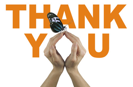 indebted: A gentle thank you - female hands making the O of You in THANK YOU,  in orange on a white background, with a closed resting butterfly delicately balanced on fingertips Stock Photo