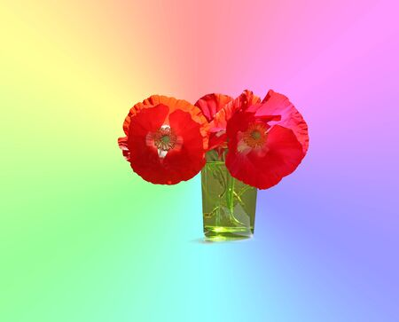 Poppy - the flower with many meanings around the world - three beautiful red poppies in a small green glass on a radiating pastel rainbow colored background ideal for a wall hanging and message Stock Photo