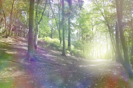 side light: The Enchanted Forest - Beautiful bokeh effect sloping woodland scene with ethereal coloring and a bright light orb formation on right hand side on the horizon of the path