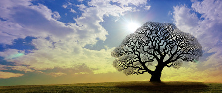 Winter Oak Tree Banner - a black silhouette of a large oak tree with no leaves against a gold and blue wide sky with bright sunburst behind the tree and copy space Stock Photo