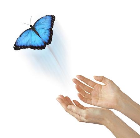 Soul Release - open vrouwelijke handen met een grote blauwe vlinder weg en omhoog geïsoleerd op een witte achtergrond, gemeenschappelijke metafoor voor een vertrekkende ziel Stockfoto