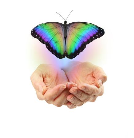 Loslassen - schalenförmige weibliche Hände mit einem großen Regenbogen farbigen Schmetterling weg bewegen und auf einem weißen Hintergrund, gemeinsame Metapher für eine scheidende Seele isoliert