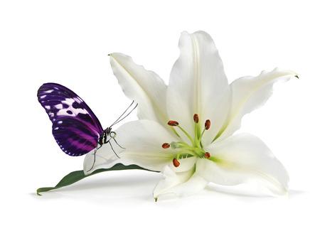 Mindfulness Moment con Lovely Lily y Beautiful Butterfly - cabeza de lirio blanco con una mariposa de color rosa y negro descansando sobre un pétalo aislado en un fondo blanco Foto de archivo - 79870848