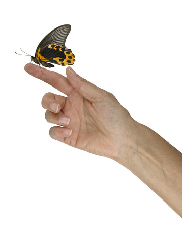 Mindfulness Moment with Golden Butterfly - female hand outstretched with a gold and black butterfly sitting peacefully on her index finger against a white background