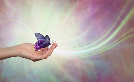 Quédese quieto y deje que la vida venga a usted - mano femenina abierta con una mariposa negra y rosa descansando abierta alada contra un fondo de energía etérea con un susurro de luz blanca
