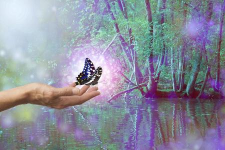 Magische sprankelende vlinderversie