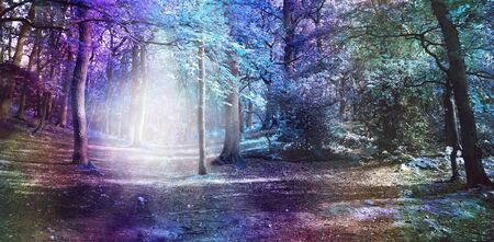 Otherworldly Visitation Ethereal Woodland Scene - wide multicoloured woodland scene with a bright shaft of white light