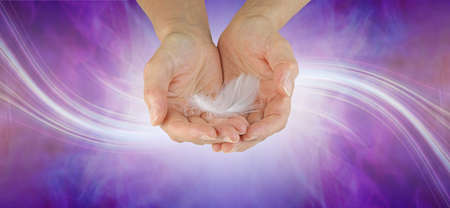 A Message from your Guardian Angel banner - female cupped hands with a delicate white feather against a purple background with a swish of white laser lines flowing from left to right and copy space