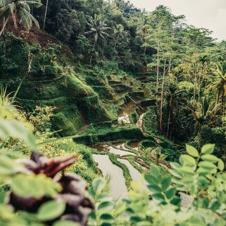 Hillside with rice farming. World's most beautiful mountains landscapes shape in nature. Typical Asian green cascade rice field terraces paddies. Ubud, Bali, Indonesia. Same as MuCangChai, Vietnam.