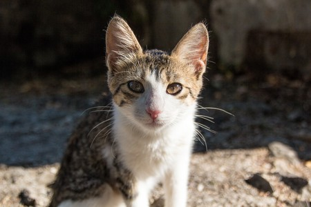 Cute little homeless kitten on the street. Colored stray kitten looking plaintively into the camera. Stock fotó
