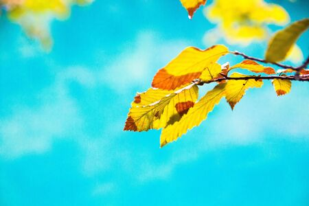 Bright yellow leaves on a background of azure water. Autumn blurred background. Bright colorful autumn landscape.