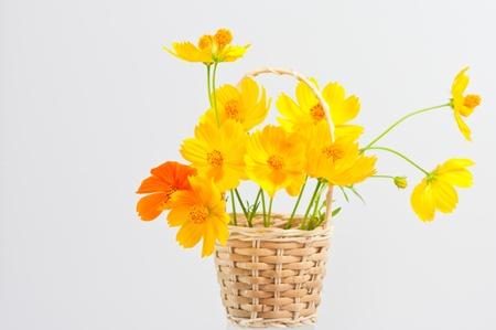 medical  plant: Cal�ndula, una planta medicinal, flor amarilla sobre fondo blanco Foto de archivo