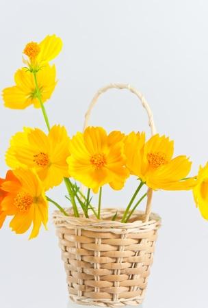 Calendula, a medical plant, yellow flower on white Stock Photo