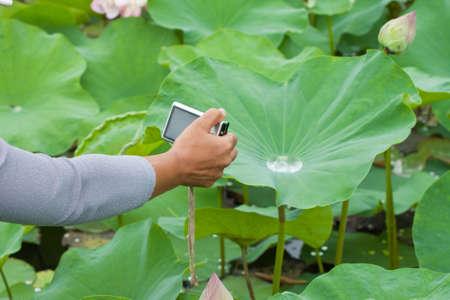 beautiful lotus with water  photo