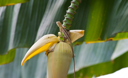 dragon on Banana flower  photo