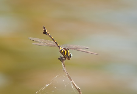 purae: dragonfly Waterfront Stock Photo
