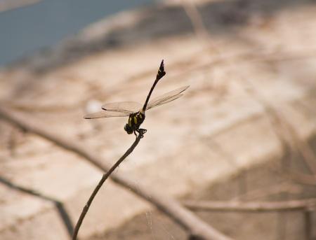 purae: dragonfly Waterfront Stock Photo