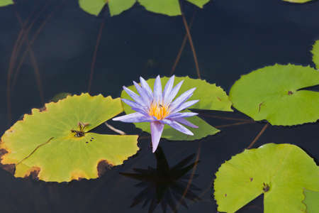 beautiful lotus In the pool Stock Photo - 14405807