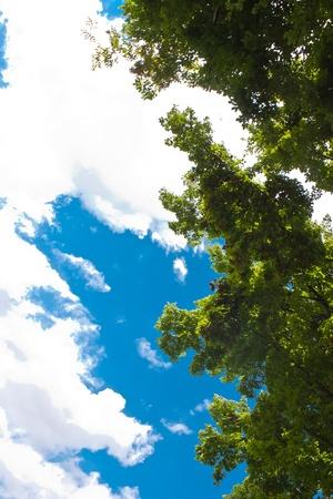 Leaf pine  photo