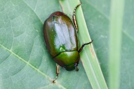 bug Stock Photo - 14879648
