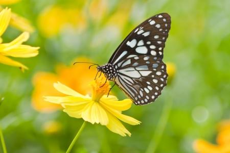 farfalla su fiore Archivio Fotografico