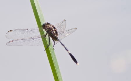dragonfly Waterfront photo