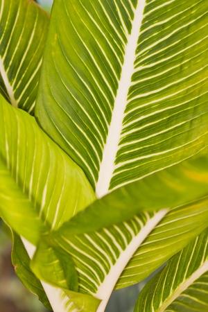 stinging  nettle: Detail of a stinging nettle plant