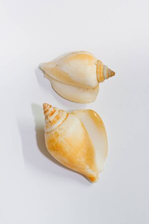 shell On a white background  photo