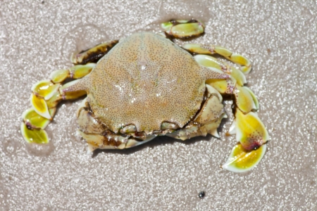 crab on the sand  photo