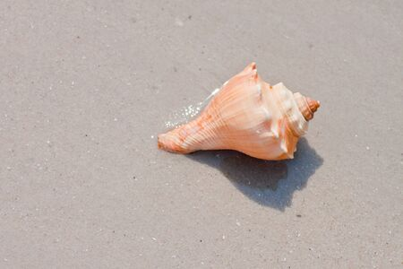 shell  on the sand photo